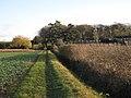 Footpath approaching Weston Colville - geograph.org.uk - 1637681.jpg