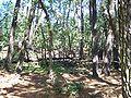 Forêt de la Coubre 032.jpg