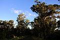 Forest - Easter Island (5956407820).jpg