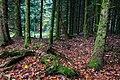 Forest Floor (230205377).jpeg