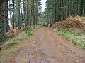 Forest Track at Balliemore - geograph.org.uk - 276977.jpg