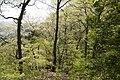 Forest in Mt.Nabeashi 01.jpg
