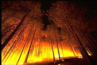 Forestfire2.jpg