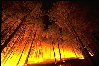 Conflagration - Forest fire