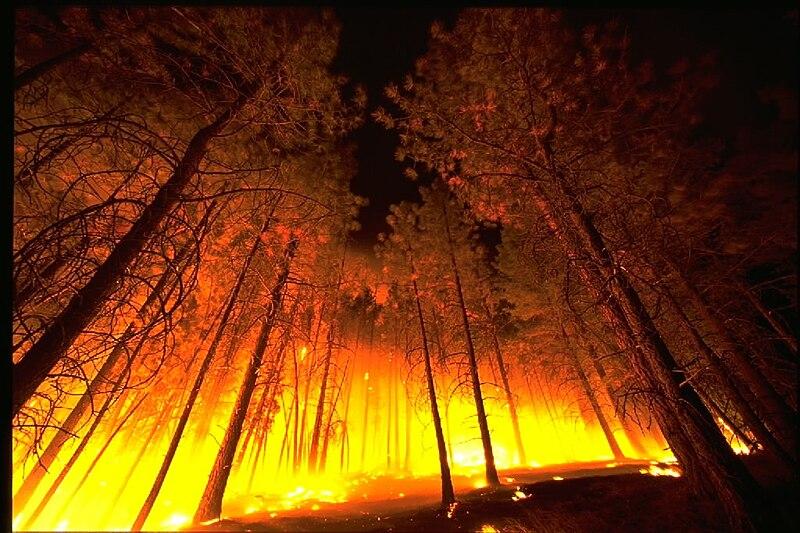 ஐம்பூதங்கள் - உரைநடை, கட்டுரை, அனுபவம் பிறவும்… போட்டி முடிவு 800px-Forestfire2