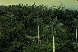 Cutervo National Park
