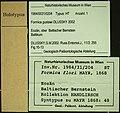 Formica gustawi NHMW1984-31-204 specimen tags.jpg