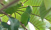 A green parrot with blue wings