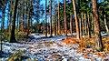 Forrest in Northern Bohemia - Les na severu Čech.jpg