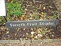 Forsyth Fruit Garden Chelsea Physic Garden.jpg