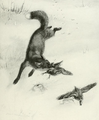 Fox&pintailedgrouse.png