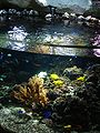 France - Val d'Europe - Sea Life - Poissons tropicaux.JPG