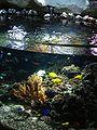 France - Val d'Europe - Sea Life - Poissons tropicaux.JPG