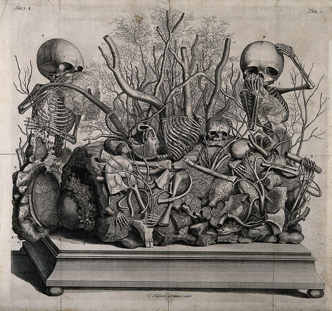 File Frederick Ruysch Tableau Of Injected Vessel Wellcome