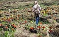 Fritillaria valley, Golestan Kuh, Khvansar County (1391022419201592).jpg