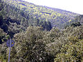 FuenteSanLorenzo 2009March19 SierraMadrona.jpg