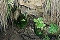 Fuente entre las montañas - Agua potable - panoramio.jpg