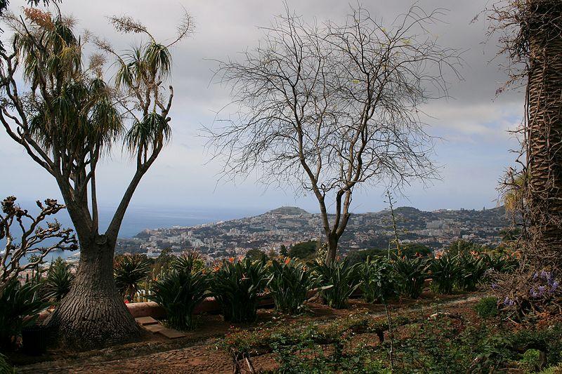 Image:Funchal - Blick vom Botanischen Garten auf die Stadt IMG 1748.JPG