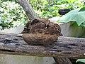 Fungi-106-xavier cottage-yercaud-salem-India.jpg