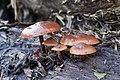 Fungi (8430263328).jpg
