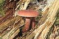 Fungus 2 (Bukovec) (15963515316).jpg