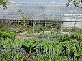 Göteborgs botaniska trädgård-IMG 2225.jpg