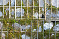 Gabion terre pierre Citadelle Lille biodiversité 2016 Lamiot a 2.JPG