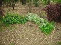 Garden Mulch.JPG