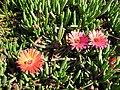 Gardenology-IMG 5178 hunt10mar.jpg