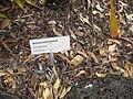 Gardenology.org-IMG 2195 rbgs11jan.jpg