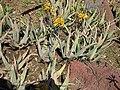 Gardenology.org-IMG 2763 hunt0903.jpg