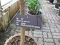 Gardenology.org-IMG 7921 qsbg11mar.jpg