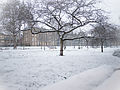 Gardens in the snow (8397989293).jpg