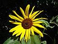 Garten011.jpg