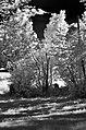 Garten (240649231).jpeg