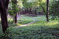 Gfp-wisconsin-lapham-peak-state-park-winding-trail.jpg
