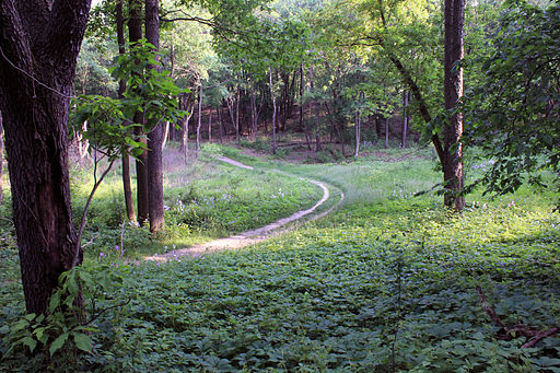 Gfp-wisconsin-lapham-peak-state-park-winding-trail