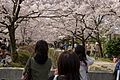 Ginkakuji 2009-04-08 (3633961217).jpg