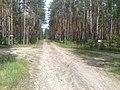 Gmina Pysznica, Poland - panoramio (5).jpg