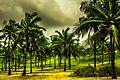 Goa Coconut tree.jpg