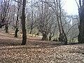 Gorgan Alangdarre forest - panoramio - Alireza Javaheri.jpg