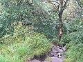 Gradbach Wood - geograph.org.uk - 56502.jpg
