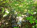Graniczny Potok (dopływ Trzebinki), Góry Opawskie 2020.09.08 04.jpg