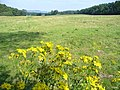 Grassland by Deerleap Wood - geograph.org.uk - 538502.jpg
