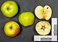 Gravensteiner (apple) jm120648.jpg