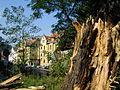 Graz Heinrichstrasse broken tree.jpg