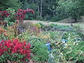 Green Spring Gardens Park - flowers and greenery.JPG