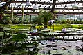 Greenhouse No. 28 at the Saint Petersburg Botanical Garden - panoramio.jpg