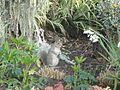 Grey squirrel in Regent's Park.JPG