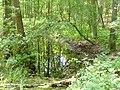 Grosser Lienewitzsee - Sumpf (Bog) - geo.hlipp.de - 39329.jpg